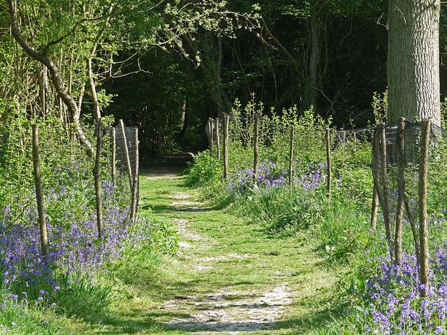King's Wood, Sanderstead (5)