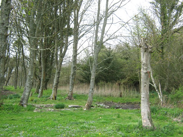 The wood beside Kirkdale Port