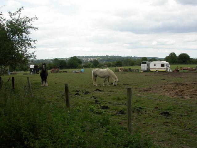 Lambs' Green, paddocks