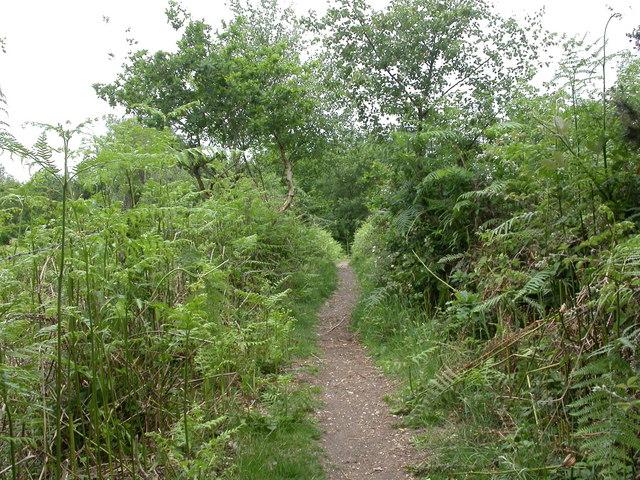 Lambs' Green, Wayman's Way
