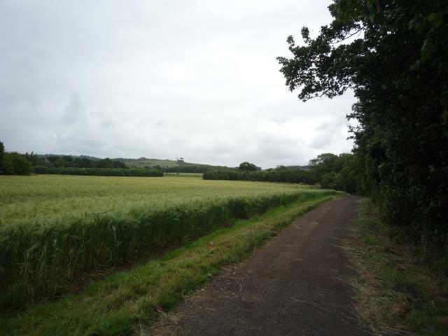 Ormesby Hall - Barley