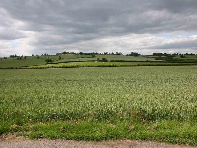 Fields north of lane near Autumn Cottage