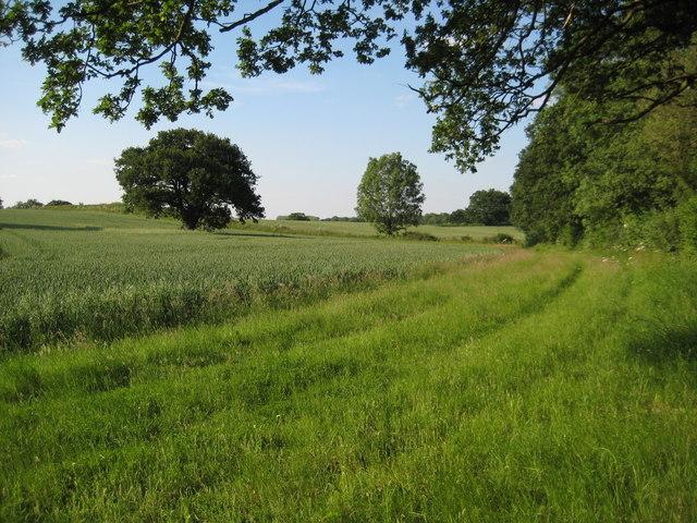 Arable land near Newland