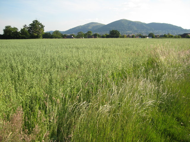 Oats and the Malvern Hills