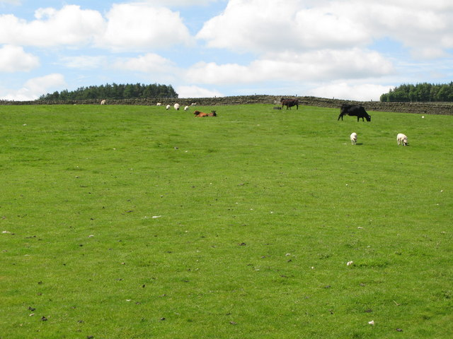 Pastures south of Juniper House (2)