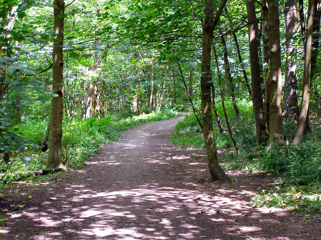 Path through Spring Wood