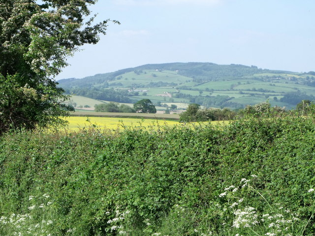 Hedgerow with rape and hills near Chirbury, Shropshire