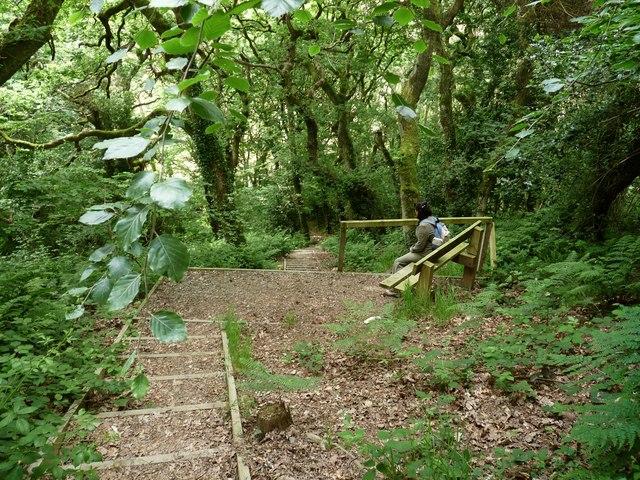 Steps in Chapel Woods