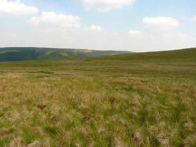 Marsh and tussock grass on Esgair Ddu