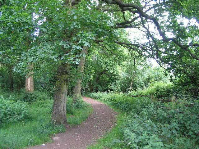 The edge of Tilehill Wood