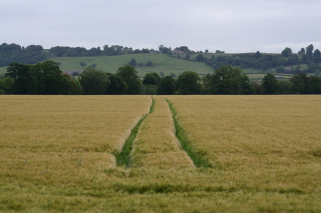 Tracks in Barley