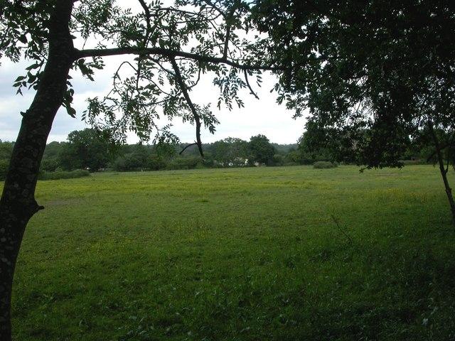 Wimborne, grazing land