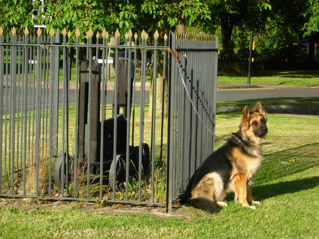 Dog on Bilton Green