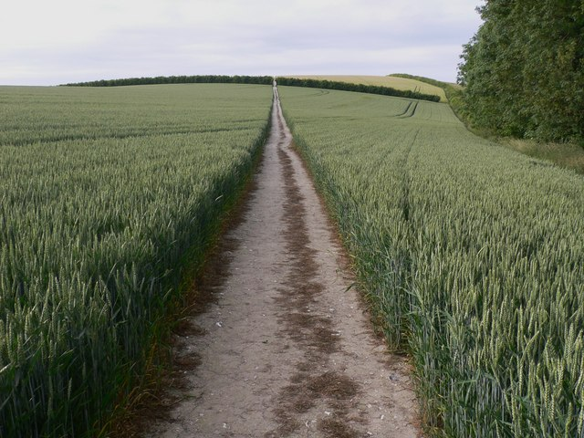 The Staunton Way on Chalton Down