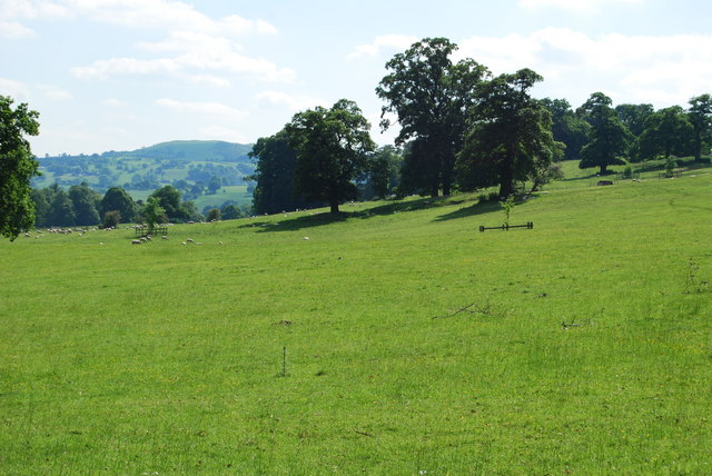 Parkland trees and grazing land