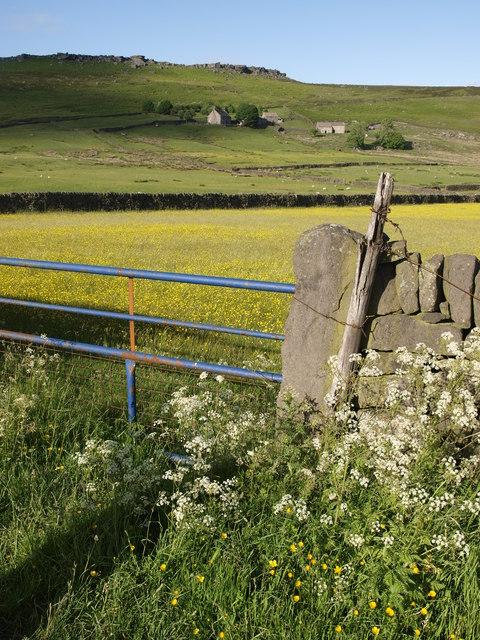 Overstones farm