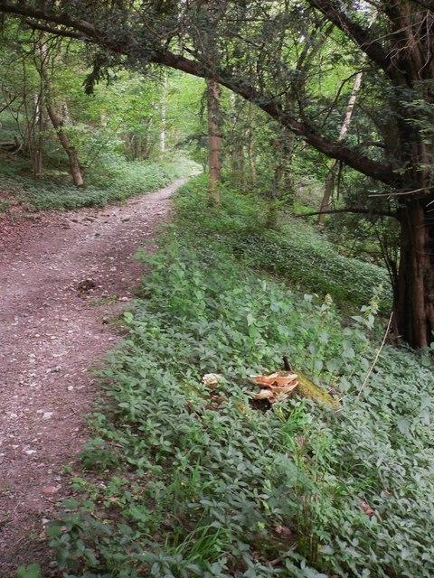 Bridleway through Wick Hanger