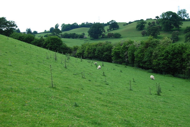 Steeply sloping north facing grazing