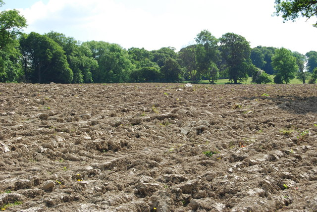 Ploughing unearths the stones