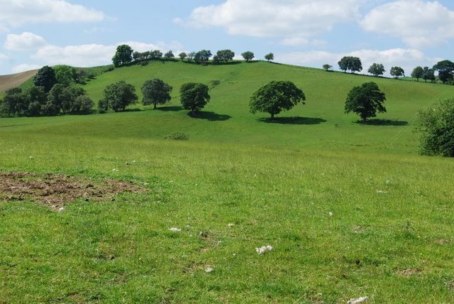 Grazing land with old hedge line trees