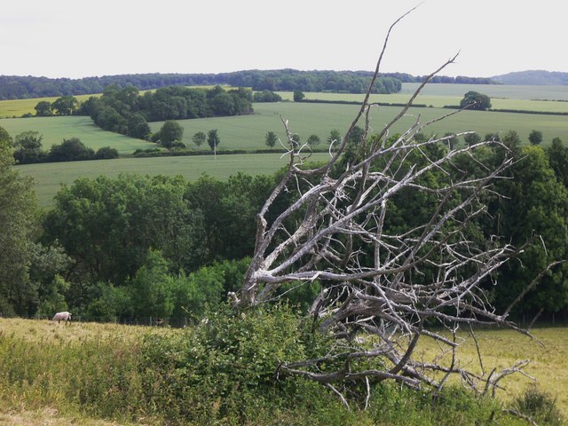Deadwood and a view of Chalton Down