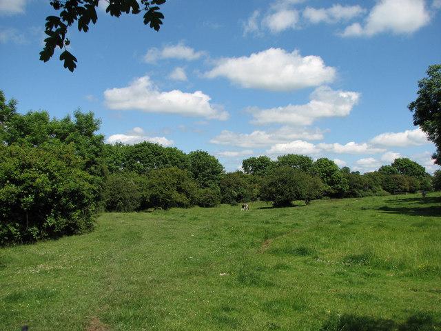 The Eaton Branch near White Lodge
