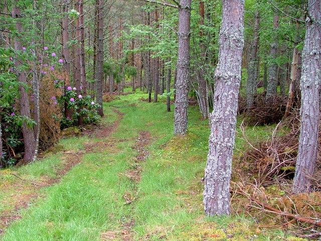 Track in Feyglass Wood