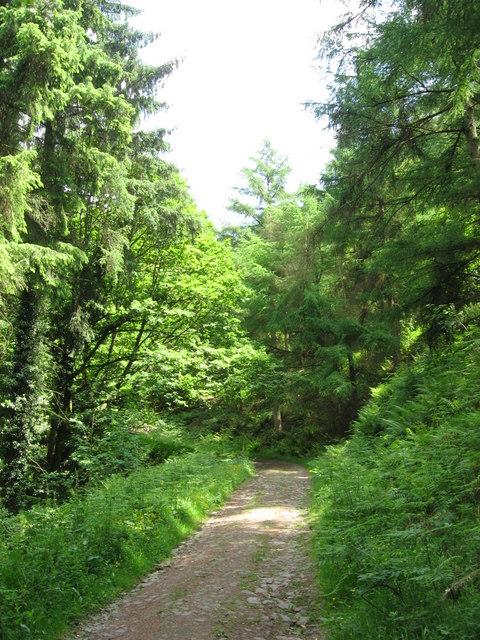 Forest path near Cwm Carn