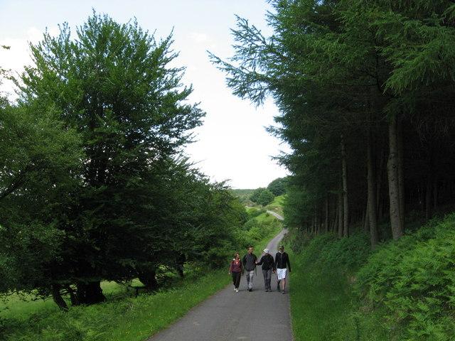 Lane near Mynydd Henllys