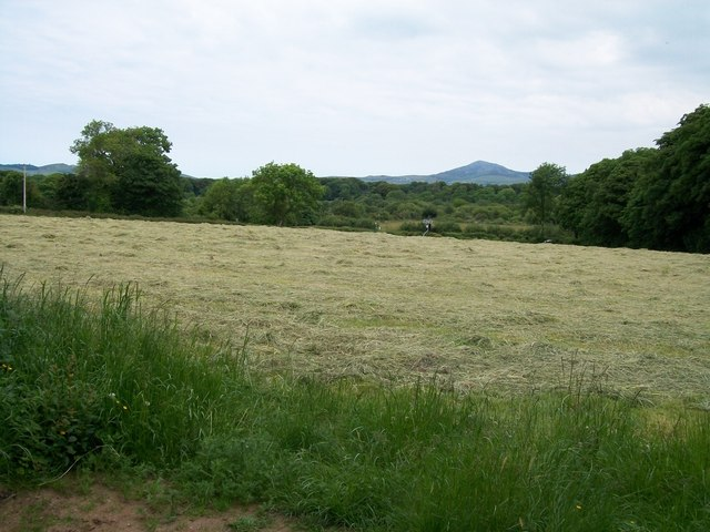 Hayfield near Plas-ym mhenrhos