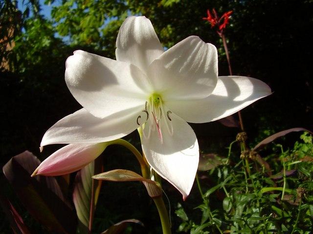 Nice Flower in Mr Straws Garden