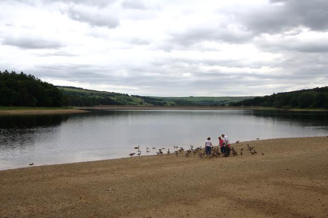 Feeding the Birds, Swinsty Reservoir