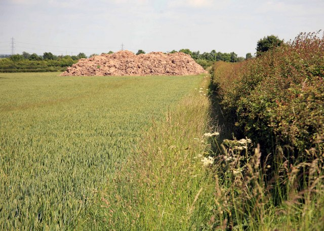 Dung heap in the Cornfield
