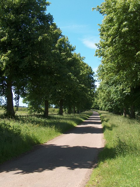 Tree-lined lane leading to Tile Kiln Wood, Welbeck Estate