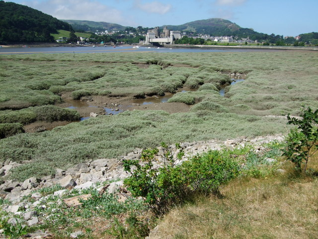 Foreshore on River Conwy