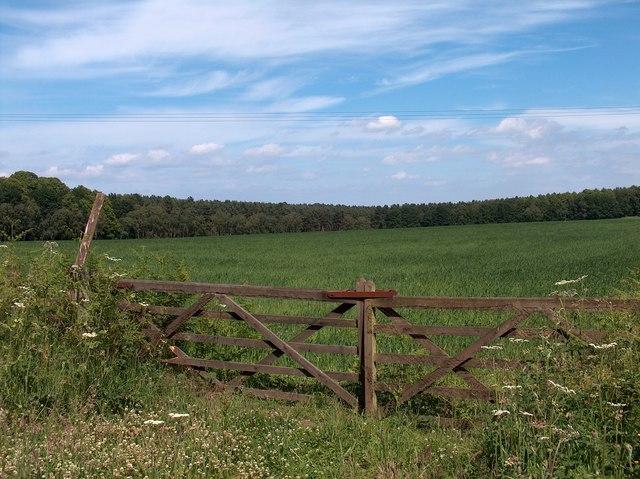 Gateway into Haddon Pastures, Welbeck Park
