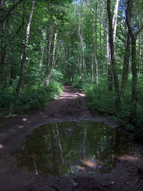 Puddle reflections, Robin Hood's Way, Welbeck Park