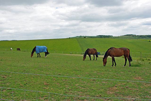 Horses grazing, Longfurlong Farm