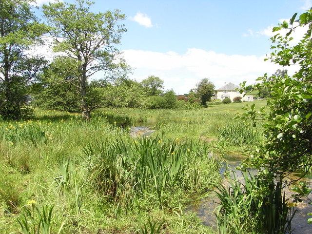 River Hooke and wetland south of Bridge Farm