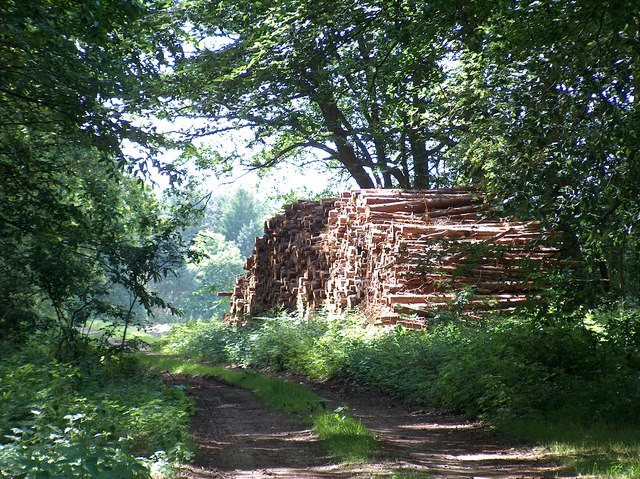 Woodstack in Welbeck Park, north of Long Valley