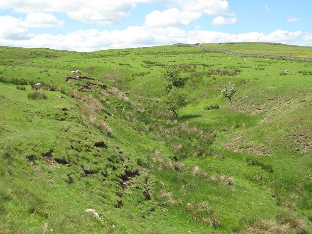 The cleugh of Oakeydene Burn