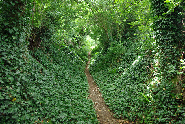 Bridleway towards Patching Hill