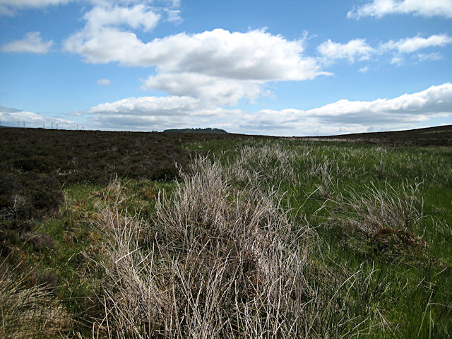 Damp moorland and distant wind farm