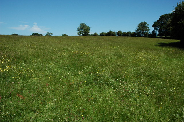 Field at Cladswell