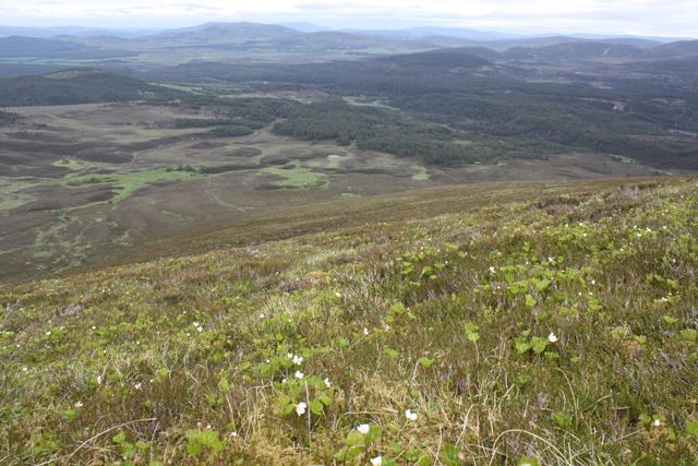 NE slopes of Meall a' Bhuachaille