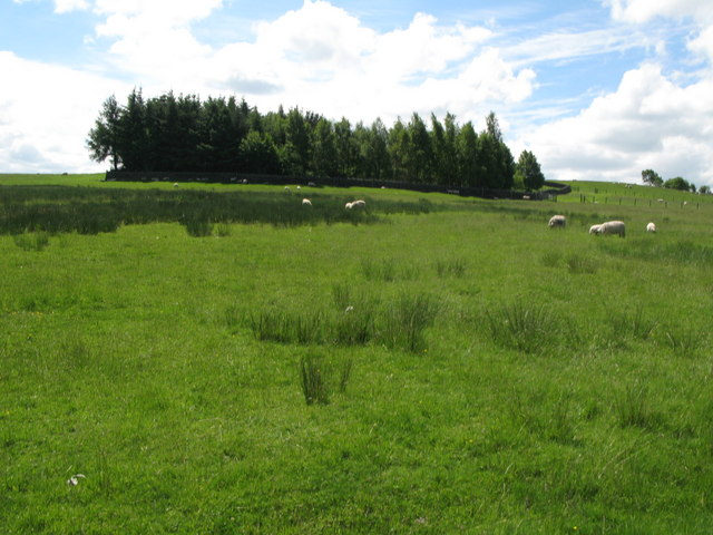Pastures and plantation near Cleugh Head