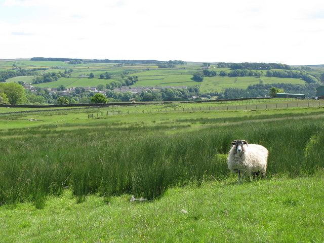 Pastures near High Broadwood Hall