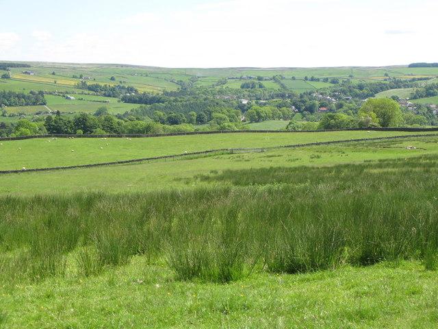 Pastures near High Broadwood Hall (2)