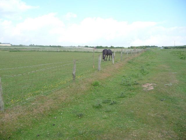 Drying a field of hay on Heol-y-mynydd