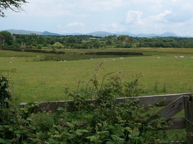 Sheep pastures between Gellidara and Rhyllech